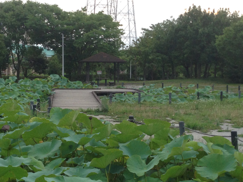 しらさぎ公園.jpg