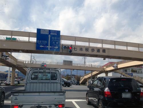 七本桜.jpg