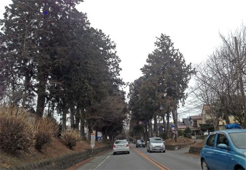 杉並木街道.jpg