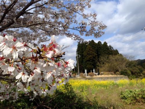 桜_02.jpg